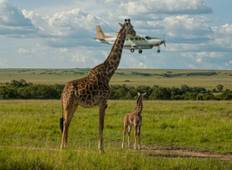 4-Days, 3Nights Flying Safaris Masai Mara Luxury Governors Camp - High End  Tour