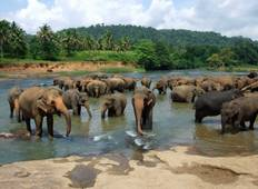 Colourful Sri Lanka All Inclusive Private Tour
