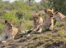 Sabi Sand Privat Safari inkl. Unterbringung in der Luxus Savanah Game Lodge - 5 Tage Rundreise