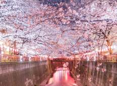 7 Days Essence of Spring Tour - Cherry Blossom Seasonal Tour from Tokyo 2021 Tour