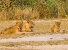 3 DaysMurchison Falls Wildlife Safari Tour