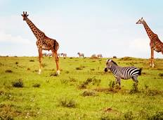 9-Day Kenya and Tanzania Budget Safari  Tour