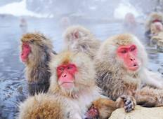 Allure of Japan with Snow Monkeys 2021/2022 Tour