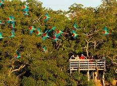 Pantanal, Bonito & Iguazu Adventure 9D/8N (from Foz do Iguacu) Tour