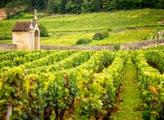 Cycling the Grand Crus of Burgundy Tour