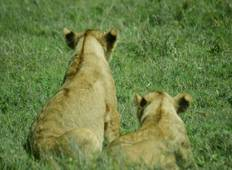 3-Day Big Five (5) Safari- Serengeti & Ngorongoro Crater Tour
