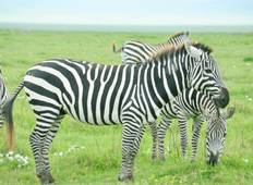 5 Days - Serengeti Great Migration Safari, Private Tour Tour
