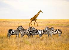Tanzania: The Serengeti & Beyond (7 destinations) Tour
