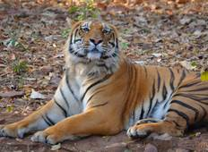 Safaris In Central India Tour From Delhi/Mumbai Tour