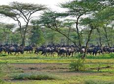 Northern Tanzania's Serengeti Trail Tour