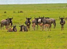 Northern Tanzania Riding Safari Tour