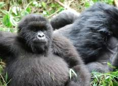 Gorillas and Game Parks Tour