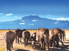 11 Day Highlights of Tanzania Tour