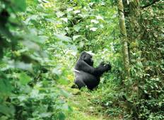 28 Day Game Parks & Gorillas Tour