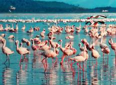 Flight of the Flamingos Tour