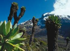 Kilimanjaro - Shira Route Tour