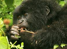Gorillas, East Africa & the Zambezi (Victoria Falls to Nairobi) Tour