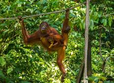 Borneo Wildlife Highlights Tour