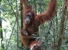 Borneo Wildlife Discoverer (from Kuching to Sandakan) Tour