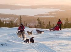 Finnish Dogsledding Adventure Tour