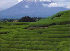 Mt Fuji & the Japanese Alps Tour