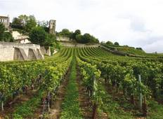 Bordeaux Vineyard Walk Tour