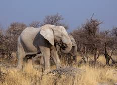 Botswana and Falls Overland: Wildlife Walks & Safari Drives Tour