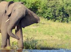 Southern Africa Encompassed: Bush Camps & Wildlife Spotting Tour