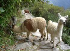 Cusco To Lima (12 Days) Incas & Amazon (inc. Amazon Jungle) Tour