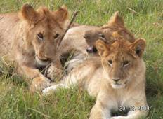 7 Days Kenya Adventure Safari Tour
