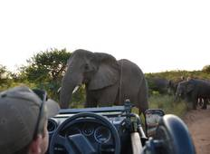 South Africa Research Experience in Karongwe Wildlife Park, South Africa  Tour