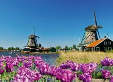 Tulips & Windmills - Amsterdam to Antwerpen Tour