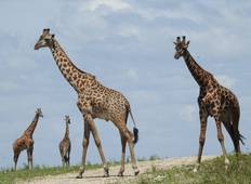 Selous Wildlife Safari Tour
