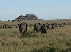 Great Migration Masai Mara and Serengeti Tour