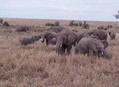 Fun Safari in Serengeti National Park Tour