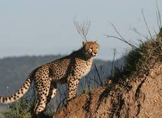 Budget Safari, Northern Tanzania Tour
