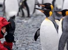 Falklands, South Georgia & Antarctica Tour
