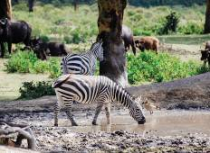 South West Safari (19 Day) Tour
