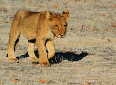 19 Day South West Safari Tour