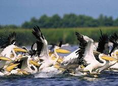 Danube Delta By Bike & Boat Tour