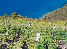 Cinque Terre Guided Walk Tour