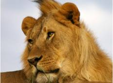 Maasai Mara Safari 3 Days Tour