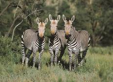 Southern African Magic Accommodated 14 Days Tour