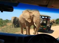 Garden Route and Addo Adventure Tour