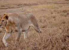 Serengeti to Victoria Falls Adventure Tour