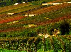 Beaune and Burgundy Vineyards Tour