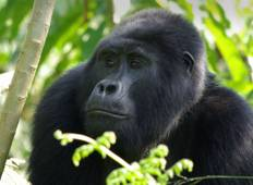 Gorilla Trek Independent Adventure (including Kampala) Tour