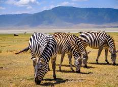 Lake Manyara, Ngorongoro Crater & Serengeti - 6 Days Tour