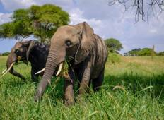 Tanzania Camping Safari Adventure - 9 Days Tour