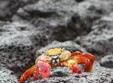 Galápagos — West & Central Islands aboard the Monserrat (11 destinations) Tour